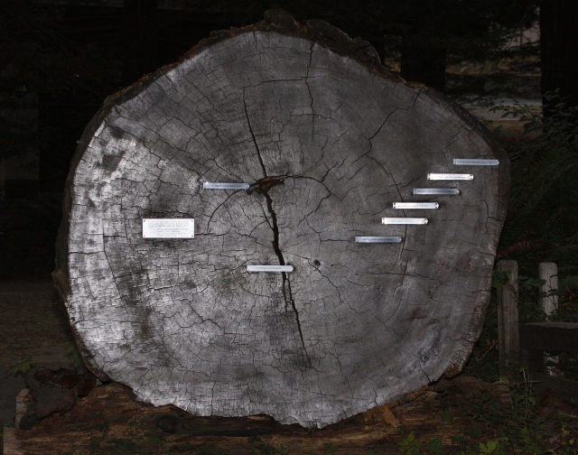Amazing ... This cross section of tree shows 839 years of life.  If you click on the image you can read the tags.