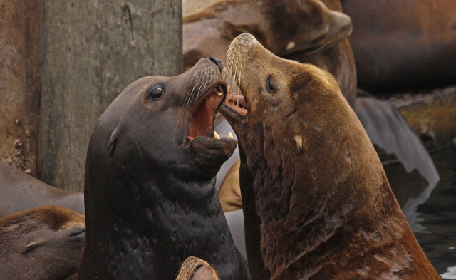 """There were quite a few """"discussions"""" going on due to the serious over-crowding on the pier!"""