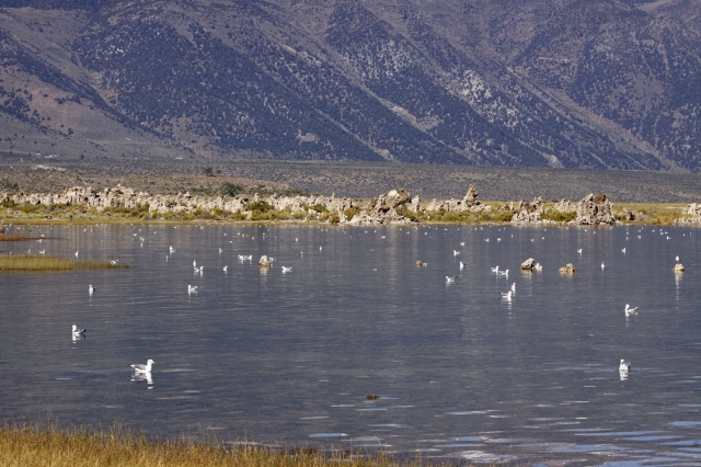 Mono Lake ... There were sooooo many birds on the lake!!!
