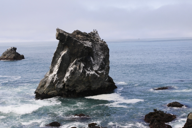 Patrick Point State Park ... This sea stack is enormous ... look at the birds perched on top!!