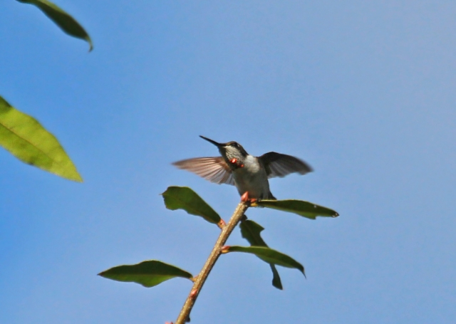 In this one the other Ruby-throated Hummingbird had passed to close for this one!!