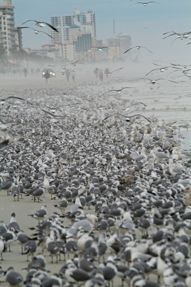 Gull Roost Daytona Beach Shores