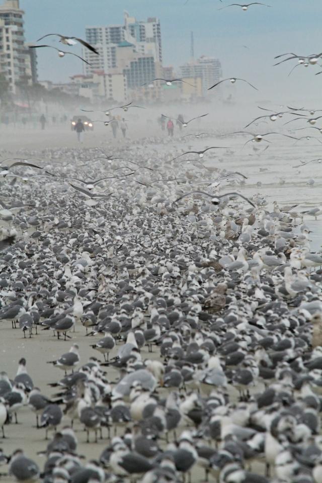 Gull Roost Daytona Beach Shores