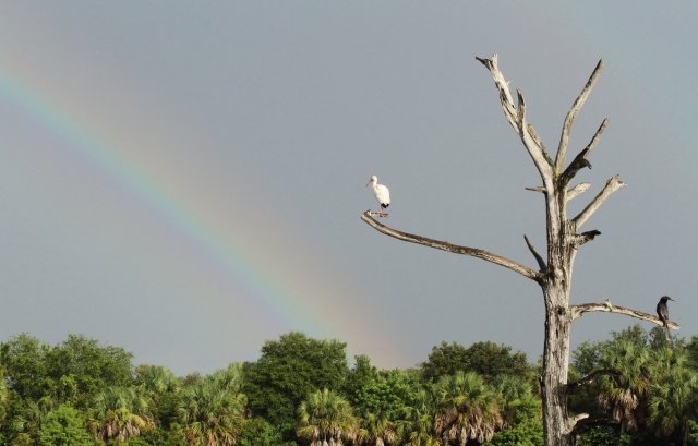 Green Cay Wetlands ... The good thing about rain is rainbows!