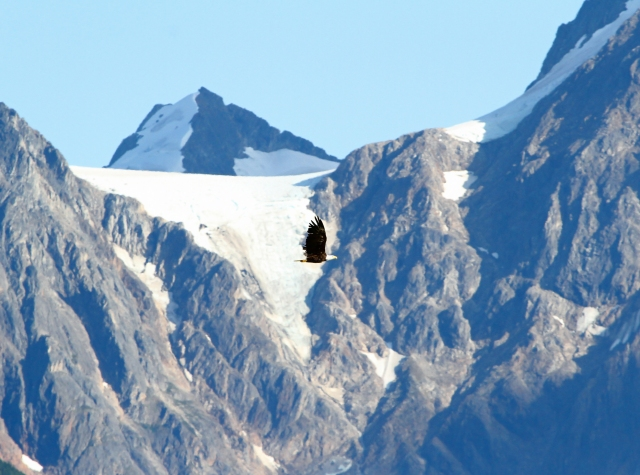 Eagle and a Glacier ...  Alaska at it's most wonderful!