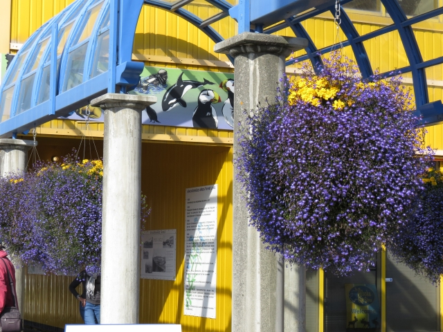 Anchorage ... There were beautiful flower baskets all over town.